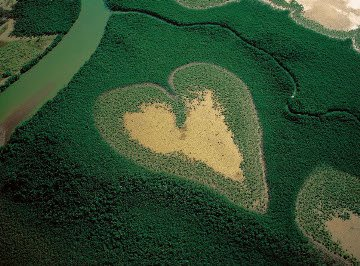 Heart_shaped_mangrove-1