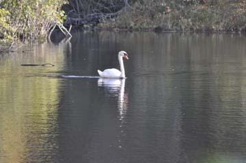 EC Swan
