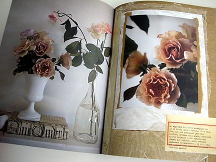 Roses 2644
